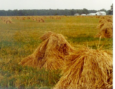 haystacks01