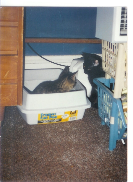 Line at the Litter Box
