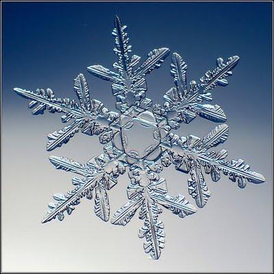 CELEBRITY PORTAL: REAL snowflakes